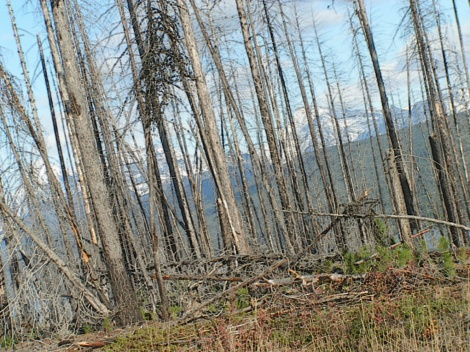 burn above fish creek