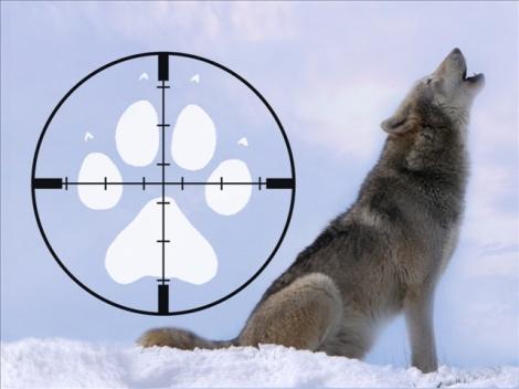 KFBB_wolf_hunt