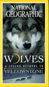 Wolves_A_Legend_Returns_To_Yellowstone