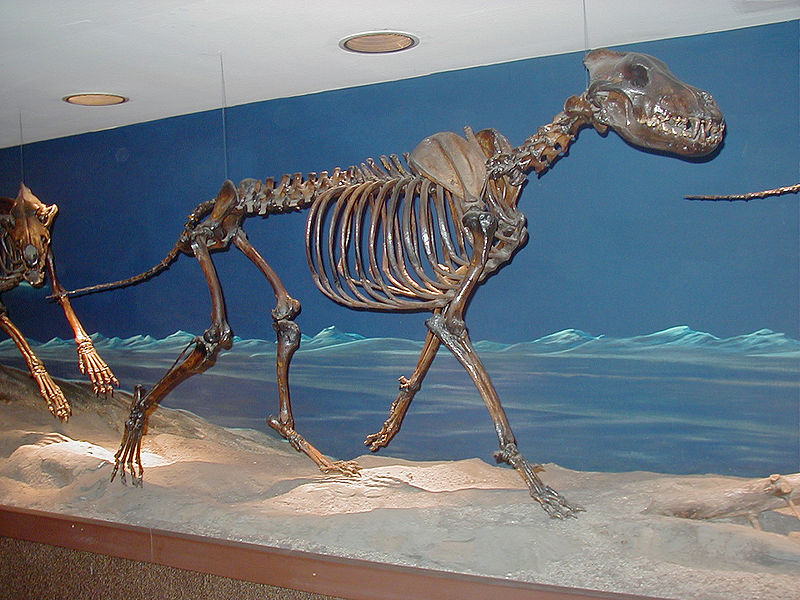 http://howlingforjustice.files.wordpress.com/2010/11/diire-wolf-skeleton.jpg