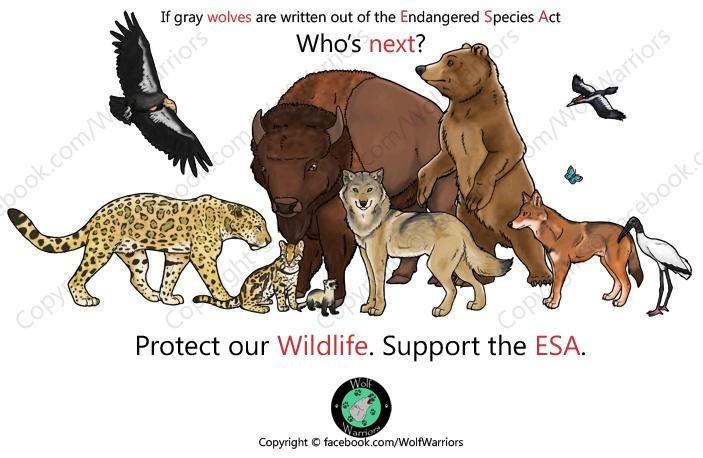 protecting endangered species essay