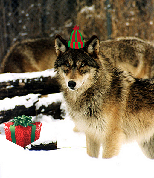 Merry Christmas Wolf Warriors!! | Howling For Justice