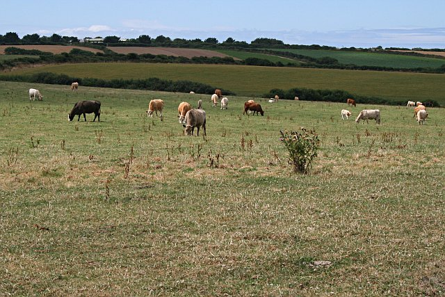 Livestock's long shadow environmental issues and options