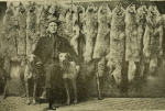 Canadian wolf hunter withpelts