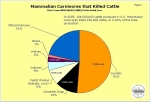 carnivores that killed cattle_note wolf lownumbers