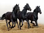 black-horse_wallpaper