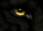 Black wolf eye_Scenic Reflections