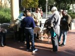 Four Legged Friends Lend Support ToRally