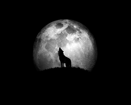 wolf howling moonlit night