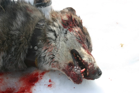 whats waiting for wolves 1