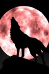 wolfmoon sportwallpapersdotcom