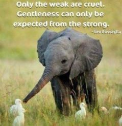 Elephant Kindness