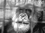 Pass the great ape protection act Project R andR