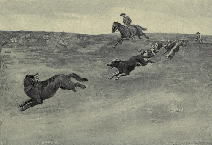 Wolves Hunting with Dogs
