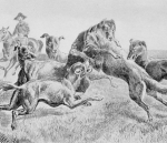 Wolf hunt with dogsWC