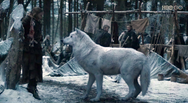 Ghost dire wolf Game of Thrones