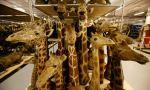 Stuffed giraffe heads