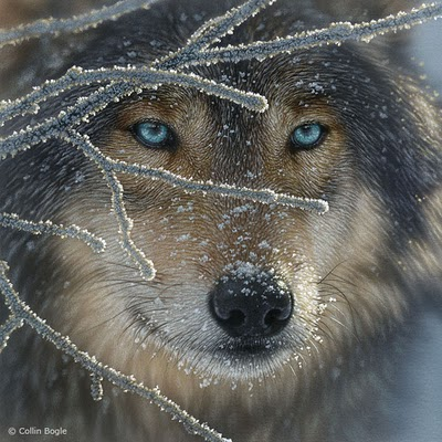 Wolf_Fire in Ice_Collin Bogle