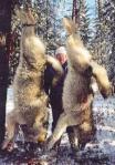 Wolves slaughtered_photobucket_ tanyaisa
