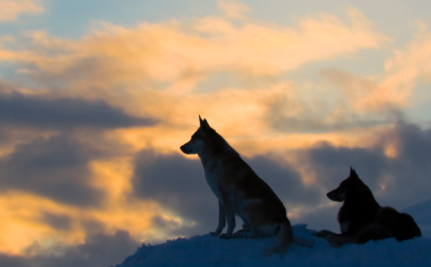 Wolves sunset ThinkStock