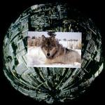 borgsphere1 bwaferdotcom `