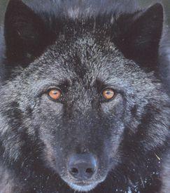 Quanah Animal Edutainment