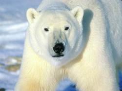 polarbear hslfdottypepaddotcom