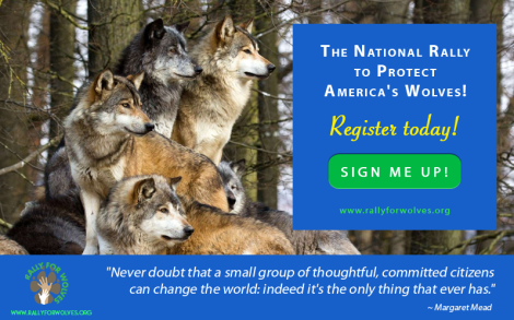 National Rally For Wolves 1