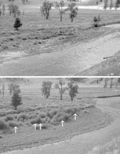 Effects of elk overgrazing in Yellowstone