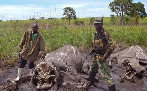 Elephants slaugtered  by poachers in Garamba National Park