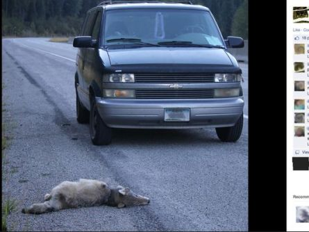 Facebook post_Toby Bridges claims to run over two wolves_Photo posted in the Great Falls Tribune