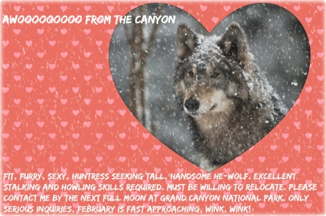 Awoooooooo from the Canyon jpg