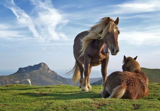 horses wiki