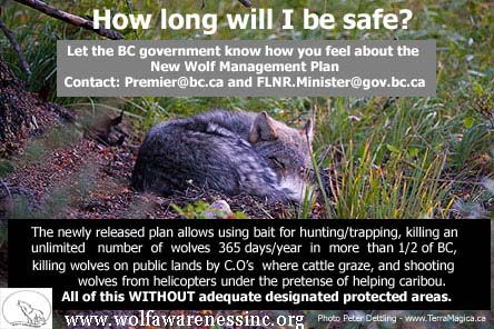 2014 Wolf Plan-poster pup2 wolfawarenessIncorg