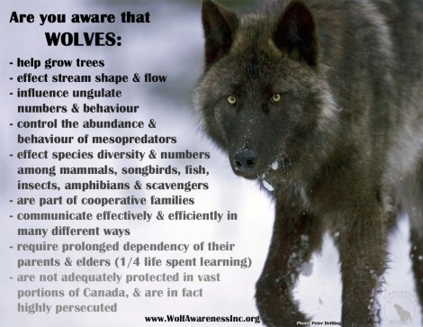 Are you aware that wolves_wolfawarenessInc.org