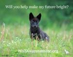 Pup Future Wolf AwarenessInc