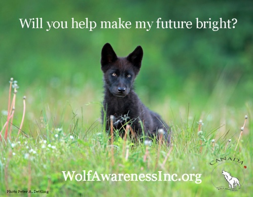 Pup Future Wolf Awareness Inc