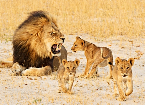Cecil and Cubs