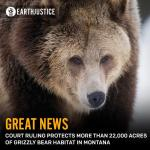 Earthjustice Grizzly BearNews
