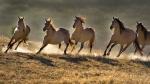wild horses wallpapers_blogspotdotcom