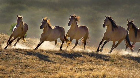 wild horses wallpapers_blogspotdotcom