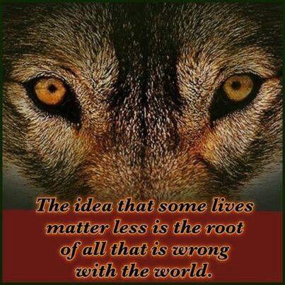 Wolf_All Life Matters pinterest
